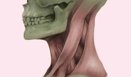 Perfect Anatomy